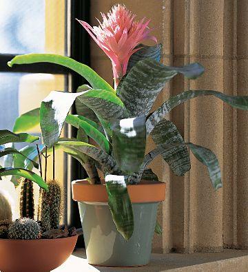 Зеленые жучки на комнатных растениях
