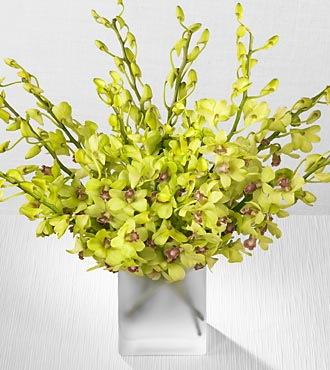 Green Dendrobium Spray