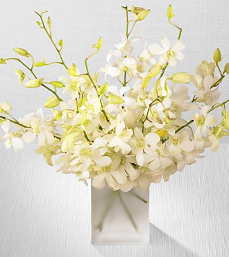 White Dendrobium Spray