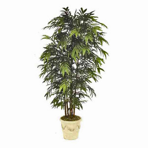 Bamboo Palm Large